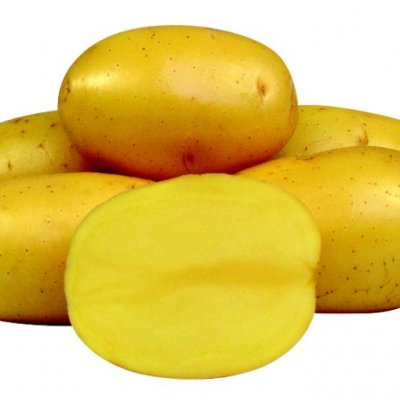 Vineta kartul