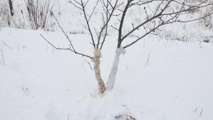 puutüvi