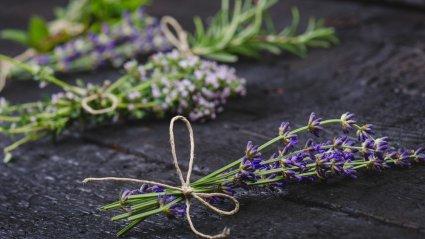 Lavendel jt kuivatatud ürdid